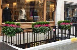 Photograph of vibrant winter plant maintenance for three troughs outside of a storefront in Savile Row, London, with pink Heather, hot pink Cyclamen and trailing ivy. Mayfair; Luxury London; Soho Florist; Contract planting; plant Maintenance; landscaping; Corporate plants