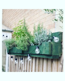 Photograph of bespoke palette planter painted green, with herbs and a hanging lightbulb string of lights. The planter is attached to a wooden fence. Office plants, corporate plants, plant maintenance, roof garden, courtyard. Landscape maintenance Sustainable planting; Pesticide Free; Balcony design; urban garden design.