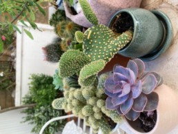 Photograph of small cacti and alpines, each in an individual handmade round ceramic pot. The planter is attached to a wooden fence. Office plants, corporate plants, plant maintenance, roof garden, courtyard. Landscape maintenance Sustainable planting; Pesticide Free; Balcony design; urban garden design.