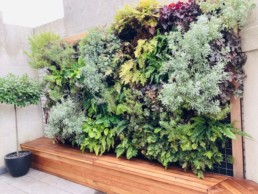 Photograph of an exterior living wall, surrounded by a wooden frame. Office plants, corporate plants, plant maintenance, roof garden, courtyard. Landscape maintenance Sustainable planting; Pesticide Free; Balcony design; urban garden design