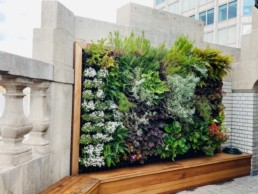 Photograph of an exterior living wall, surrounded by a wooden frame. Office plants, corporate plants, plant maintenance, roof garden, courtyard. Landscape maintenance Sustainable planting; Pesticide Free; Balcony design; urban garden design.