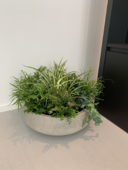 Photograph of outside-inside planting to support interior designer Jared Green. Greenery in a large, round concrete pot, with ferns, spider plants and foliage greenery. Interior design; design; landscaping; sustainable planting; plant design; plant maintenance
