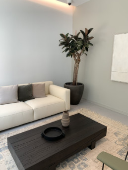 Photograph of large rubber fig tree (Ficus elastica) in a tall, black, round planter. In the room there is a cream sofa to the left of the tree with cream and olive cushions, a brown wooden table and a patterned rug. Office plants, corporate plants, plant maintenance, roof garden, courtyard. Landscape maintenance Sustainable planting; Pesticide Free; Balcony design; urban garden design.