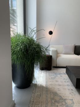Photograph of large mistletoe cactus (Rhipsalis baccifera) in a tall, black, round planter. In the room there is a cream sofa, a brown footstool, a brown wooden table and a patterned rug. Office plants, corporate plants, plant maintenance, roof garden, courtyard. Landscape maintenance Sustainable planting; Pesticide Free; Balcony design; urban garden design.